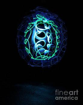 Box Turtle by Brian Jones