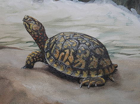 Box Turtle by Dee Cunningham