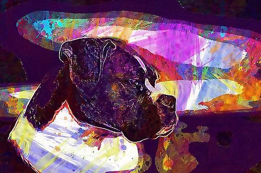 Boxer Dog Animal Pet Closeup  by PixBreak Art