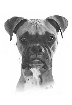 Boxer Dog Pencil Drawing by Brian Duey