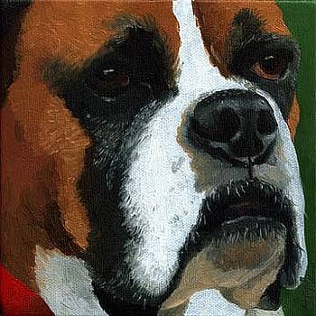 Boxer by Linda Apple