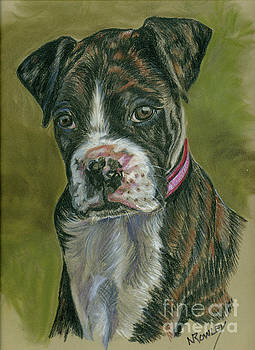 Boxer Pup by Norma Rowley