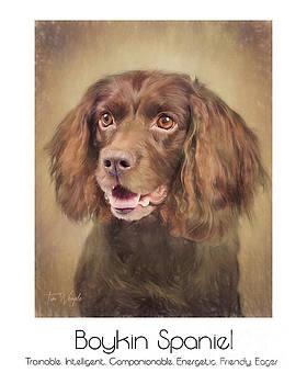 Boykin Spaniel Poster by Tim Wemple