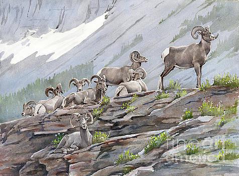 Boys Club-Bighorn Sheep by Steve Hamlin