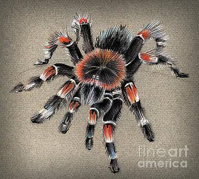 Brachypelma Smithi  Mexican Red Knee Tarantula by Daliana Pacuraru