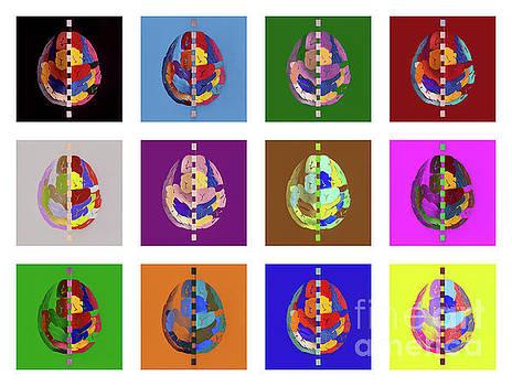 Brainbow by Hans Janssen