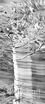 Branch Blach and White by Glennis Siverson