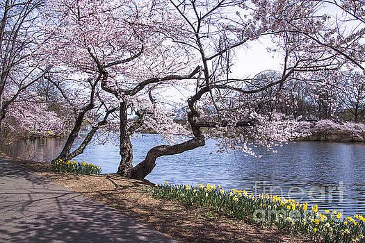 Branch Brook Park by John Stringfellow