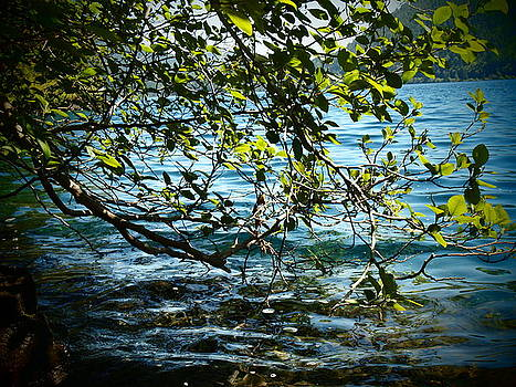 Branch meets Lake by Keelee Martin