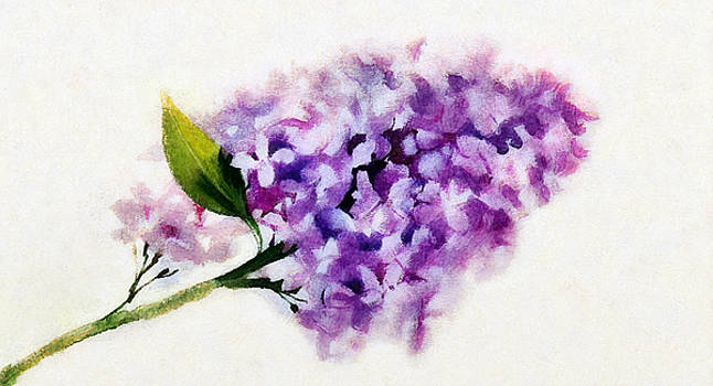 Branch of lilac by Anton Kalinichev