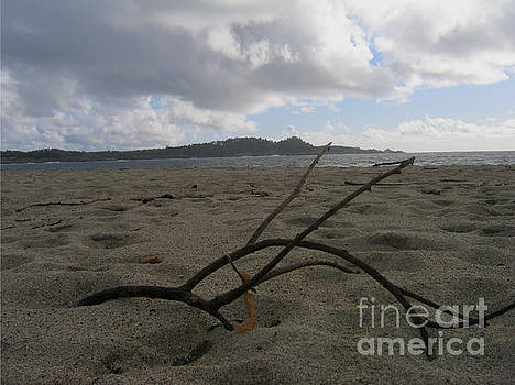 Branch On A Beach by James B Toy