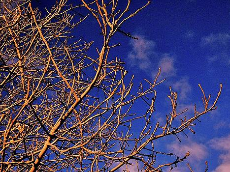 Branches and Sky by Nik Watt