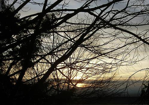 Branches at Sunset by Jaeda DeWalt