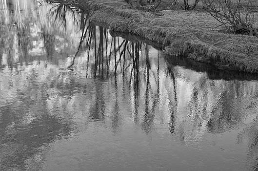 Priya Ghose - Branches Reflected