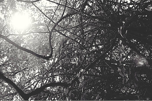 Branches by Sarah Boyd
