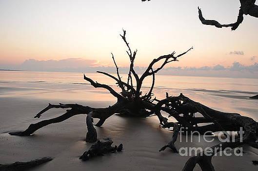 Branches Spider by Adelmo Leite de Sa