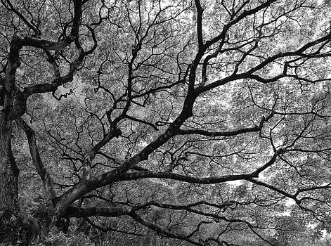 Branches by Steve  Weihe