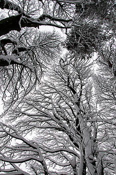 Branches with snow by Mark Denham