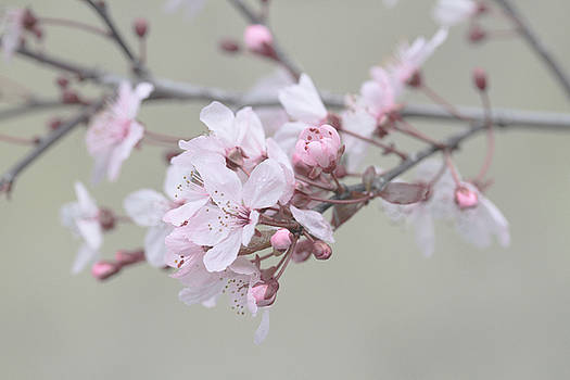 Branching Out  by Connie Handscomb