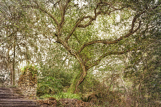 John M Bailey - Branching Out