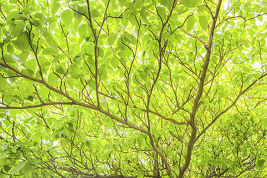 Branching Out - Tree And Leaves by Debi Bishop