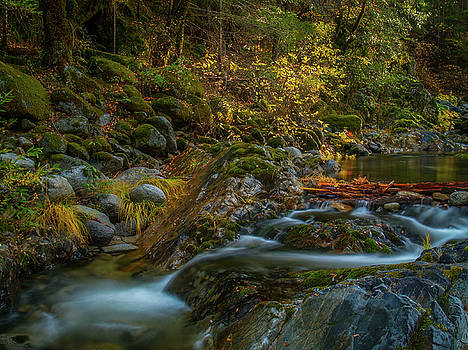 Brandy Creek Fall Colors by Michele James