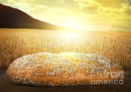 Bread and wheat cereal crops at sunset by Deyan Georgiev