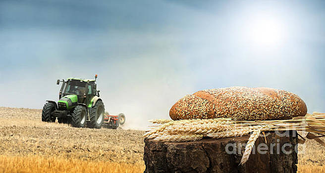 Bread and wheat cereal crops.Traktor on the background by Deyan Georgiev