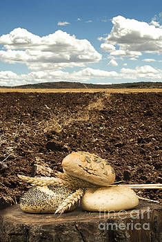 Bread and wheat ears. Plowed land by Deyan Georgiev