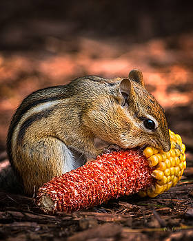 Breakfast With Chipmunk by Bob Orsillo