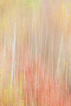 Breath of Birch Autumn Abstract by Skyelyte Photography by Linda Rasch