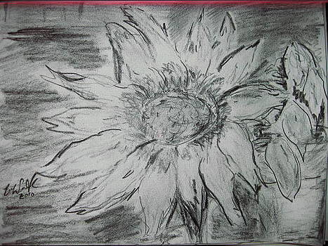 Breath of Sunflower  by Bob Smith