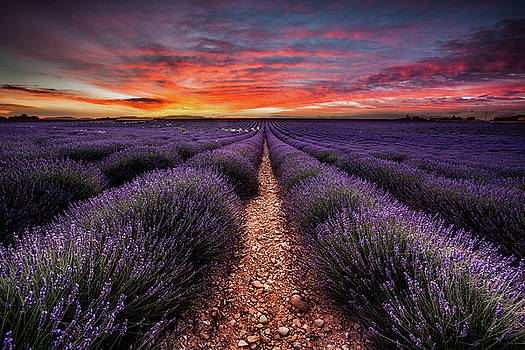 Breathe of life by Jorge Maia