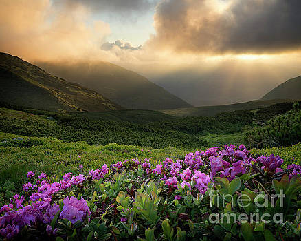 Breathtaking Rhododendron Flowers Above The Clouds by Michael Lesiv