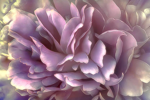 Breeze in deep pink by Darlene Kwiatkowski