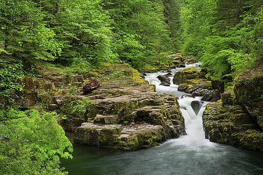 Brice Creek by Greg Vaughn