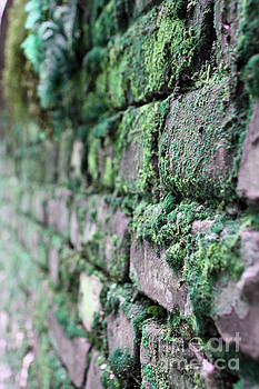 Brick wall with moss by Remioni Art