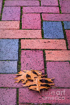 Bricks and Leaves by Cindy Tiefenbrunn