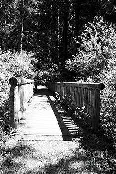 Bridge in Woods by Yulia Kazansky