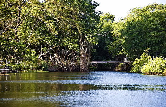 Bridge Over Swampy Waters by Sarita Rampersad