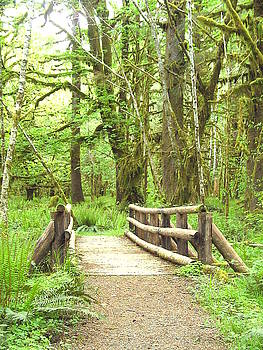 Tammy Bullard - Bridge through Old Growth Forest