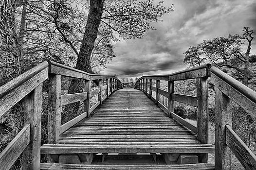 Bridge to Infinity by Andy Griffiths