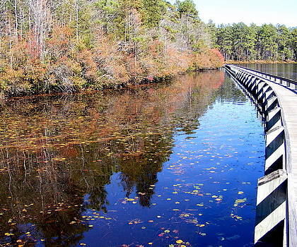 Bridge to paradise...winter serenity at Cheraw State Park by Elena Tudor
