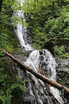 Nick Gustafson - Bridge Trail Falls