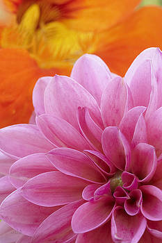 Bright Beauty by Cindy Moleski