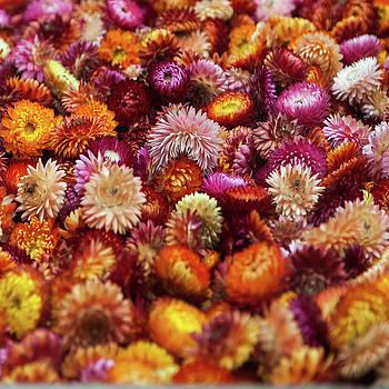Bright coloured flowers by Nigel Jones