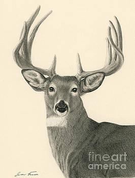 Bright Eyed Buck by Susan Fraser SCA  B Sc
