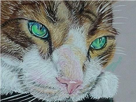 Bright Eyes by Elaine Balsley