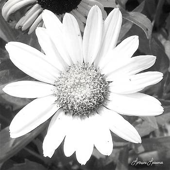 Bright in White by Lorraine Louwerse