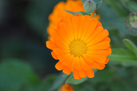 Bright Orange by Chris Baker